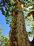 unik tree Royaltyfria Foton