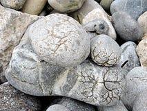 Unika havsstenar som bakgrund eller modell Royaltyfri Foto