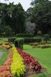 Unika kungliga botaniska trädgårdar i Peradeniya är ansedda som en av de bästa i Asien, som den innehåller en samling av 4000 art Fotografering för Bildbyråer