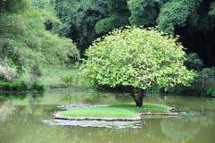 Unika kungliga botaniska trädgårdar i Peradeniya är ansedda som en av de bästa i Asien, som den innehåller en samling av 4000 art Arkivbilder