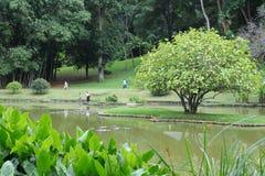 Unika kungliga botaniska trädgårdar i Peradeniya är ansedda som en av de bästa i Asien, som den innehåller en samling av 4000 art Royaltyfri Foto