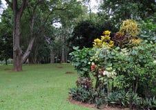 Unika kungliga botaniska trädgårdar i Peradeniya är ansedda som en av de bästa i Asien, som den innehåller en samling av 4000 art Royaltyfria Foton