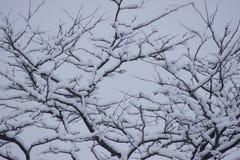 Unika seende snö täckte filialer Royaltyfri Bild