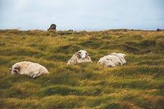 Unikalna i piękna ziemia Iceland Fotografia Stock
