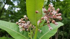 Unikalna roślina Fotografia Stock