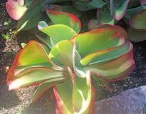 Unikalna Tropikalna roślina Zdjęcie Stock