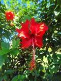 Unikalne rośliny na dużej wyspie Hawaje obrazy royalty free