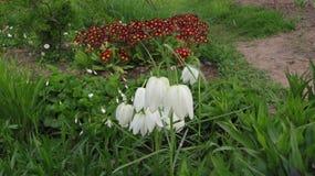unikalni kwiaty dzwonów kwiaty Obraz Stock