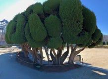 Unikalny drzewo w parku zdjęcia royalty free