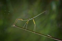 Unikalny insekt Zdjęcie Royalty Free