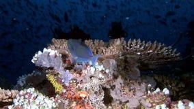 Unikalny jasny czysty dno morskie na tle krajobraz naturalny akwarium zbiory