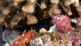 Unikalny jasny czysty dno morskie na tle krajobraz naturalny akwarium zdjęcie wideo
