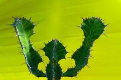 Unikalny kształt zielony kaktus na żółtym tle fotografia stock