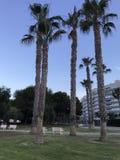 Unikalny park, plaża, lato, jachty w porcie Alicante Fotografia Stock