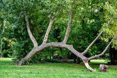 Unikalny wyginający się magiczny drzewo w drewnach acorns jesień tła granicy projekta lasowy dębowy światło słoneczne Zdjęcie Stock
