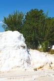 unikt abstrakt begrepp för träd i pamukkale Royaltyfri Fotografi