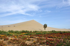 Unikt landskap i öken Arkivbild