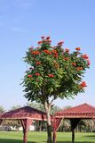 Unikt nätt träd på en varma Sunny Day Arkivfoton