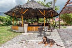 Unikt och öppet utrymme som är restorant i norr Sumatra Indonesien royaltyfri fotografi