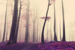 Unikt träd in i den dimmiga atmosfären av skogen Arkivfoton