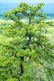 Unikt träd på bergöverkant i ny ny paltz Arkivbilder