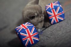 Union Jack dice Stock Image