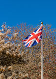 Union Jack Flag. The Union Jack, national flag of the United Kingdom, flying against a backdrop of spring blossom and blue sky royalty free stock image