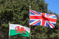Union Jack and Welsh Flag. The British Union Jack and the Welsh flag fly proudly toether. The thistles on the flagpoles represent Scotland Stock Photography
