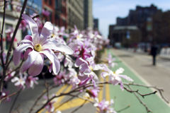 Union Square Flowers. Flowers in the Spring at Union Square, New York City Royalty Free Stock Image