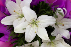 Union of white lilies Royalty Free Stock Photo