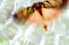 Unique abstract background blur light,colors,life. An unsual close up photograph of a moth sitting on a vintage retro stained glass window with lots of light Stock Photos