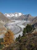 Unique Aletsch Glacier. Aletsch Glacier. Longest glacier in the Alps. Autumn scenery, yellow larch. UNESCO World heritage site stock image
