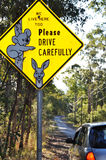 Unique Australian wildlife road sign of koala. Unique Australian road sign warning drivers to drive slowly and with care as koala bears and kangaroos live in Royalty Free Stock Photo