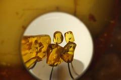 Unique Baltic amber Stock Images