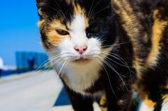 Unique Cat Close Up Portrait Stock Photo