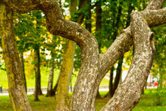 Unique curved magic tree in park Stock Images