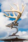 Unique deer mount Stock Image