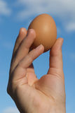 Unique Egg. A brown egg held in a hand against the backdrop of a blue cloudy sky Stock Photography