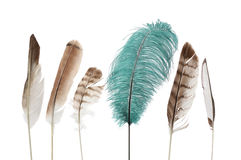 Unique feathers Stock Photo