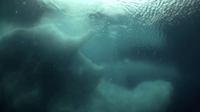 Unique Filming Shooting of iceberg under water. Beautiful landscapes amazing underwater world nature and its inhabitants in clean cold blue waters of sea ocean stock footage