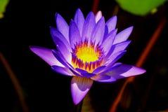 Unique Flower Stock Images