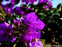 Unique flowers Stock Images