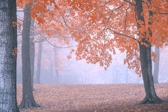 Unique Foggy Autumn Forest Background. A unique and colorful autumn forest background that can have text added over it Royalty Free Stock Photo
