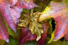 Unique golden leaf between autumn leaves Stock Photo