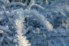 Hoarfrost ice formation on tree branches closeup royalty free stock photos