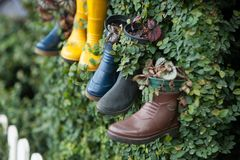 Used shoes as vase to plant for decoration. Ideas, decorative and creative. royalty free stock images