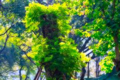 Magic tree in lumpini park bangkok. This unique image shows a beautiful mysterious fantasy tree in the world famous city park, Lumphini Park in Bangkok royalty free stock photography