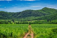 Field path through Thailand`s nature royalty free stock photography
