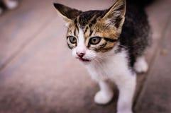 Unique Kitten Portrait Royalty Free Stock Images