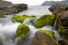 Sea water flows over rocks and mosses  Royalty Free Stock Photo